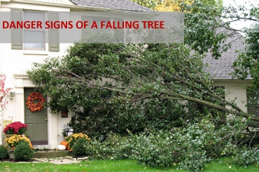 Danger Signs Of A Falling Tree