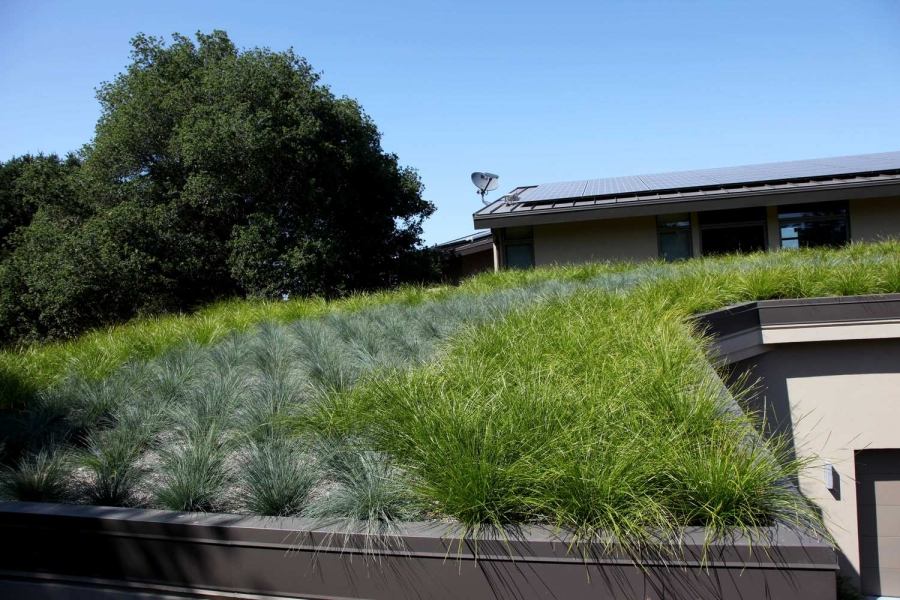 Cool Roof or Green Roof?