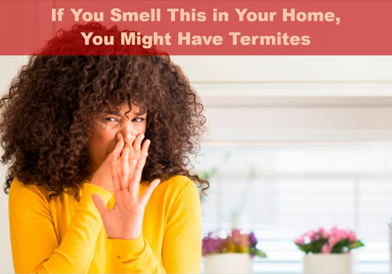 If You Smell This in Your Home, You Might Have Termites